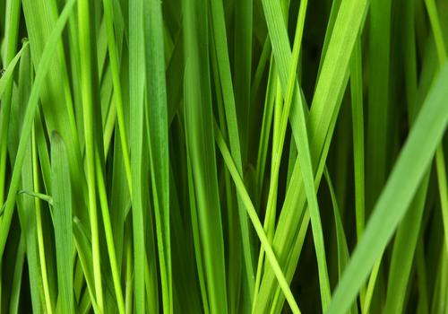 grassmedium500x350