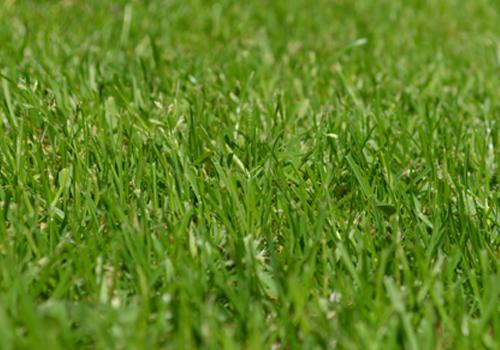 grasssmall500x350