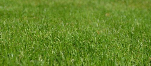 rush-meadow-ornamental-grass-spring-56011